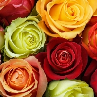 """№ 5 набор роз """"ВЕСНА""""  7шт."""