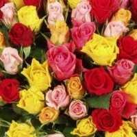 2 набор роз СРЕЗОЧНЫЙ