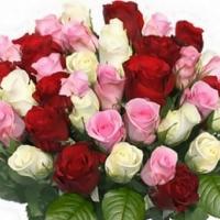 3 набор роз КОНТРАСТ