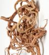 Копеечник чайный (Красный корень)