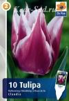 Тюльпан Клаудиа