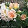 Роза спрей Милки Вей