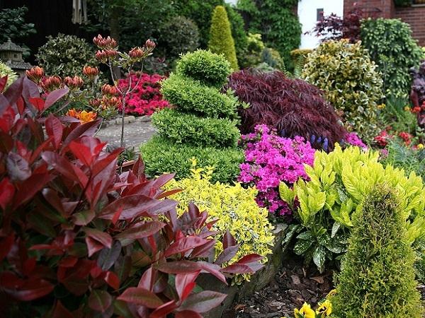 Декоративные кустарники. Саженцы цветущих кустарников.